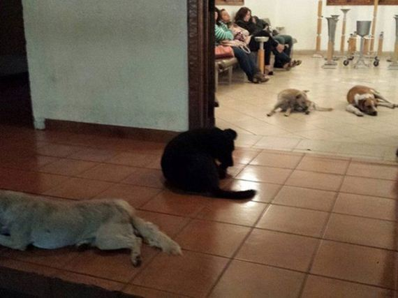 These Stray Dogs Showed Up At A Funeral – The Reason Why Is Heart Breaking