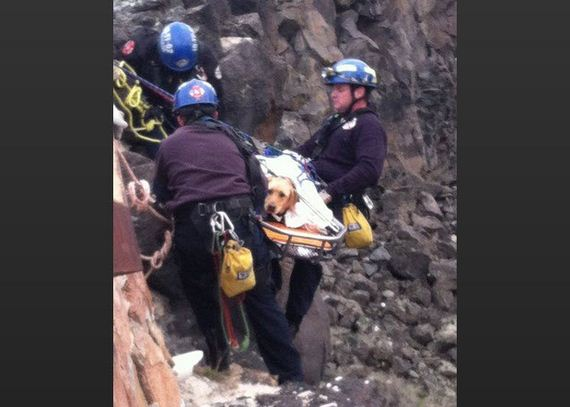 That Fell 30 Feet Down Jagged Canyon Wall Gets Rescued