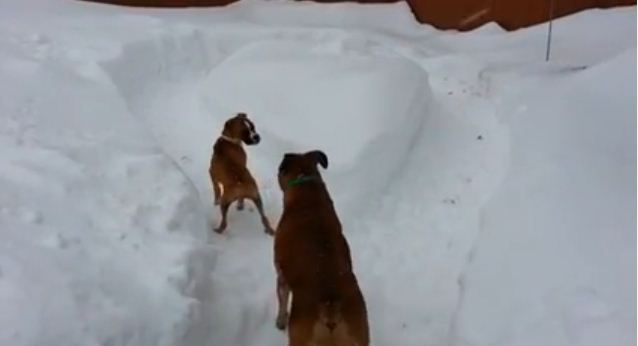 Old Dog Tricks Young Puppy Into Playing Solo – HILARIOUS