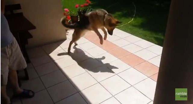 Watch This Dog's Priceless Reaction After Discovering She Has A Shadow