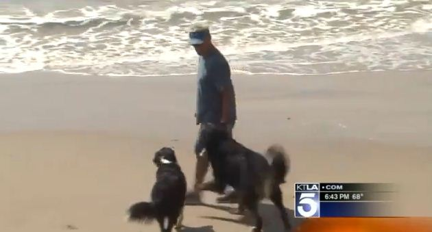 Dog Saves Swimmers From Dangerous Rip Currents In California