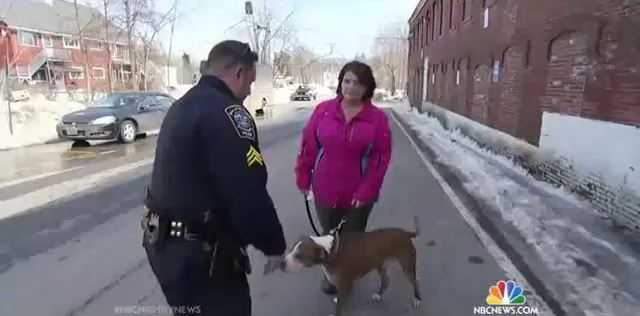 Cop Stops This Woman With A Pit Bull And Does Something She Could Have Never Expected