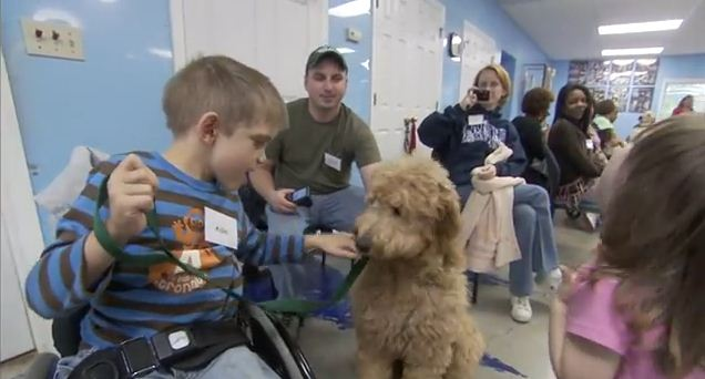 These Service Dogs Are Adding Hope To The Lives Of Disabled People