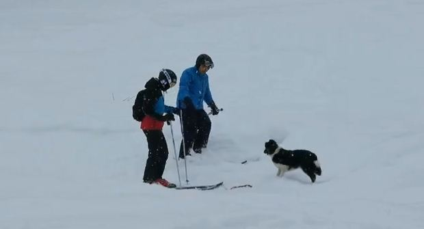 Why This Cute Dog Interrupted 2 Skiers Is The Cutest Thing You'll See Today