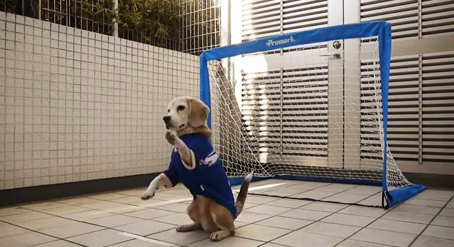 The Unusual Trick This Dog Learned Shows Just How Good Of A Sport She Is