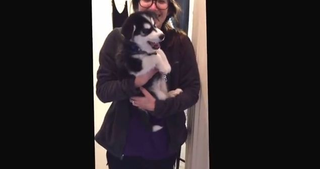 Husky Pup Tries Verbal Communication with Humans