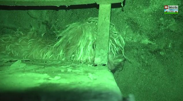 This Scared Homeless Dog Was Hiding In A Dark Sewer Tunnel But Rescuers Were Determined – Must See!
