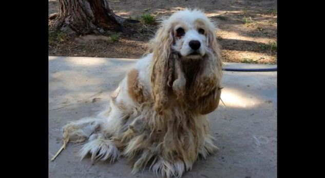 This Dog Was Dumped In The Desert But From The Moment Of Rescue Her Tail Never Stopped Wagging