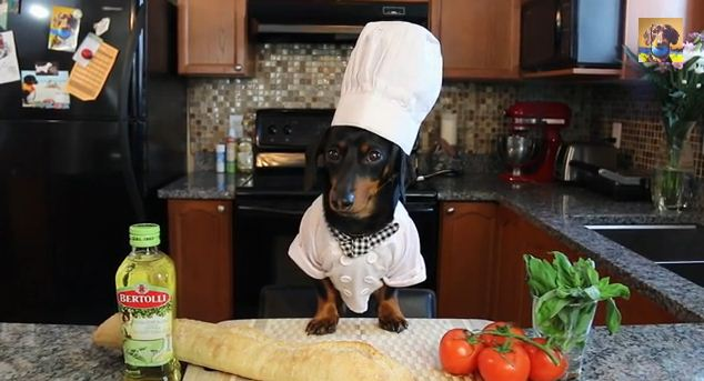This Dog Dressed As A Tiny Chef Will Make You Grilled Bruschetta