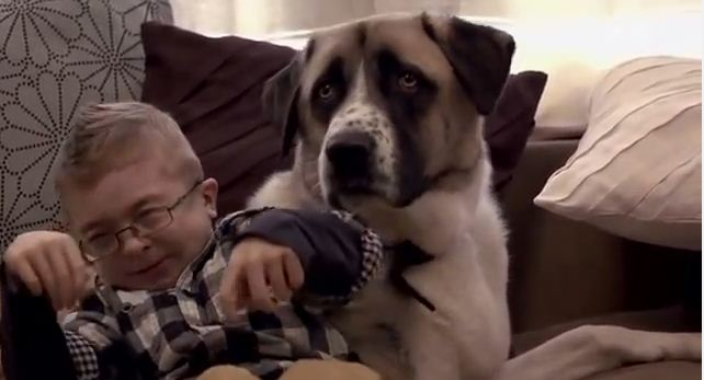 Amputee Dog Rescues Disabled Boy In A Powerful Way