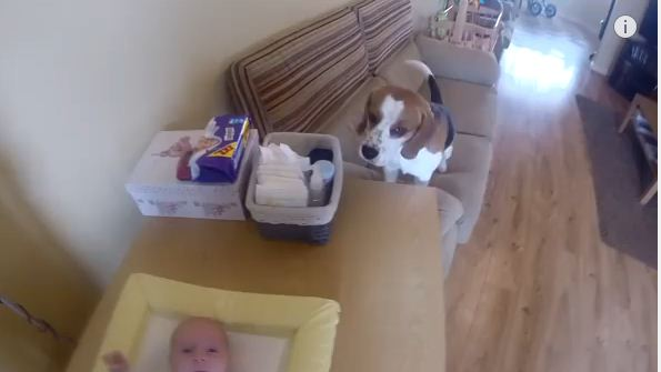When Baby Started To Cry, This Dog Had A Reaction You Need To See For Yourself