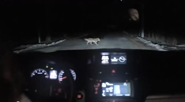 This Dog Runs In Front Of A Car At Night. You Will Not Believe What The Dashcam Caught.