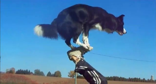 Instead Of Playing Fetch, This Dog Can Blow Your Mind With Her Incredible Tricks