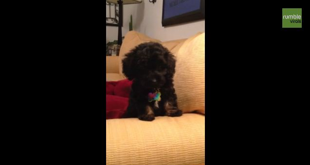 Puppy Thought To Be Mute Starts Making Bird Noises