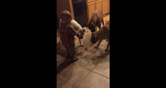 She Left Her Baby Alone With The Dogs For One Minute. What They Do- OMG!