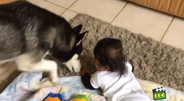 Pets & Babies Being Utterly Adorable Together