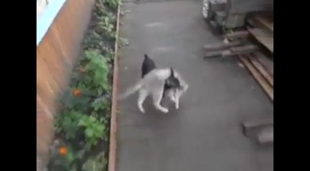 Some Dogs Play Fetch With A Ball Or Stick, But Not This Clever Little Pooch