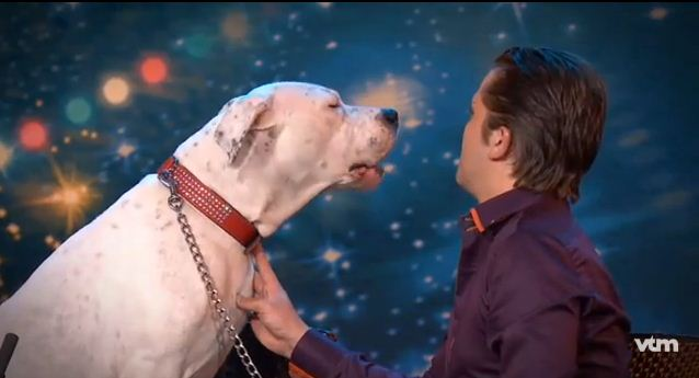 Dog Hears Favorite Whitney Houston Song. Her Reaction? Everyone Can't Stop Laughing.