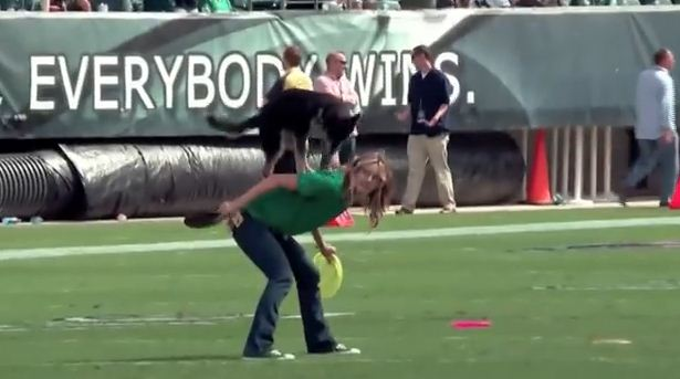 Rescued Dog's Amazing Performance At Sports Game Had This Crowd Going Nuts