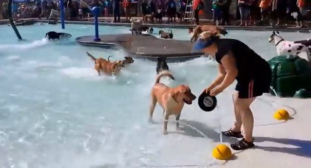 Watching This Amazing Doggie Pool Party Will Make Your Day Infinitely Better