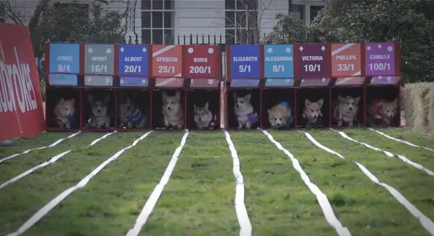 Watch The World's First Ever Corgi Race