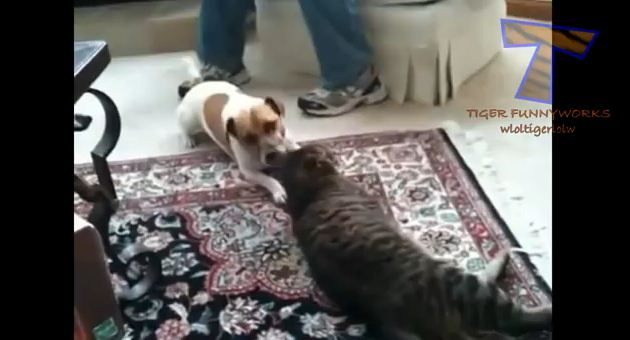 Dogs Getting the Upper Hand
