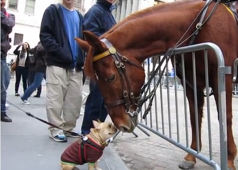 What Happens When A Dog Meets A Police Horse Will Make Your Heart Do Cartwheels