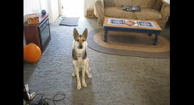 An Incredibly Dramatic Dog Plays Dead In An Oscar-Worthy Performance – Bravo!