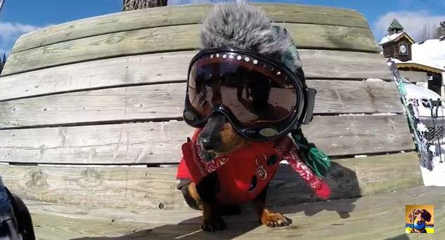This Dog Loves To Ski- No Really!