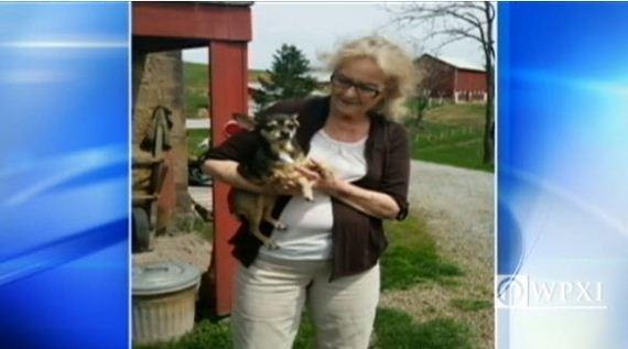 Two Chihuahuas Survive Fatal Car Crashes