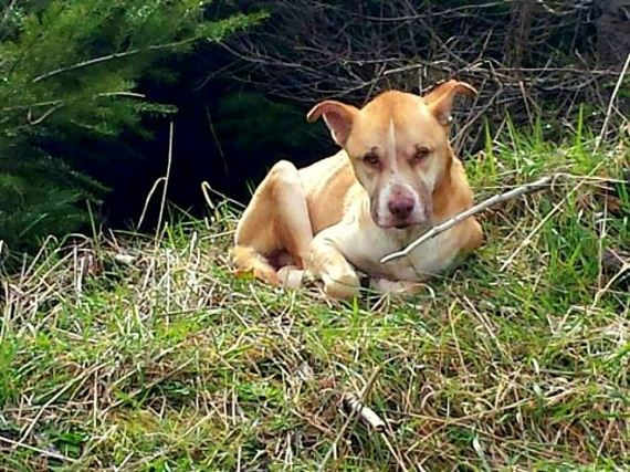Couple Rescues Dog Starving to Death on a Mountain