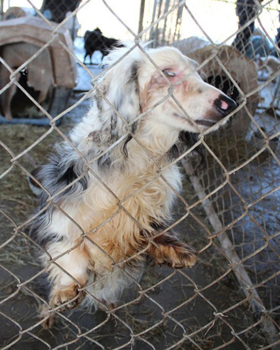 Conditions At A Puppy Mill Blinded Him, But Then He Was Granted A New Life
