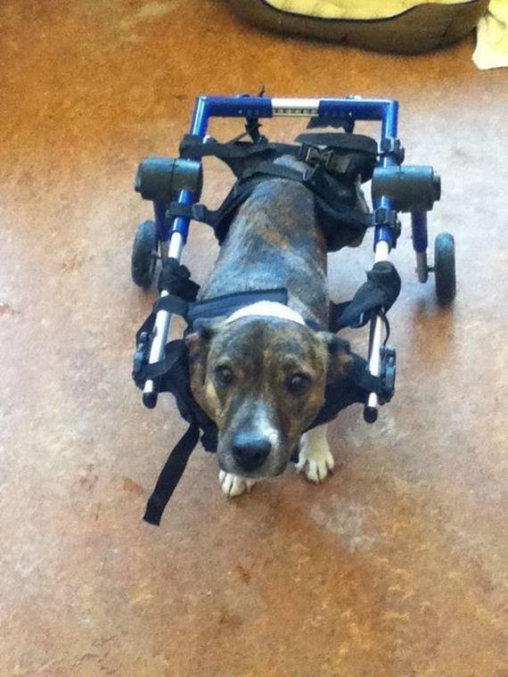 They Didn't Think He'd Walk Again, But Then This Dog Broke All The Rules