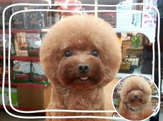 What Groomers In Taiwan Are Doing To Dogs Is Weird…But Insanely Adorable
