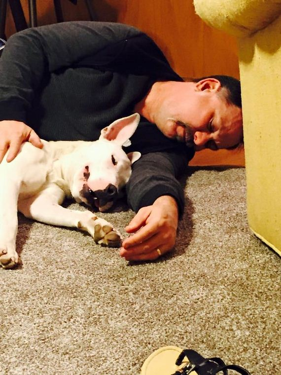 She Was Hit By A Car, Struck With A Hammer, Buried…And She STILL Wags Her Tail