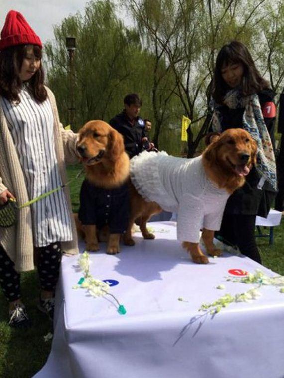 4.16.15-dog-wedding11
