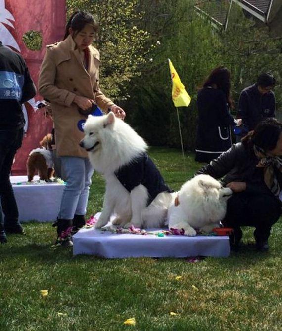 4.16.15-dog-wedding13