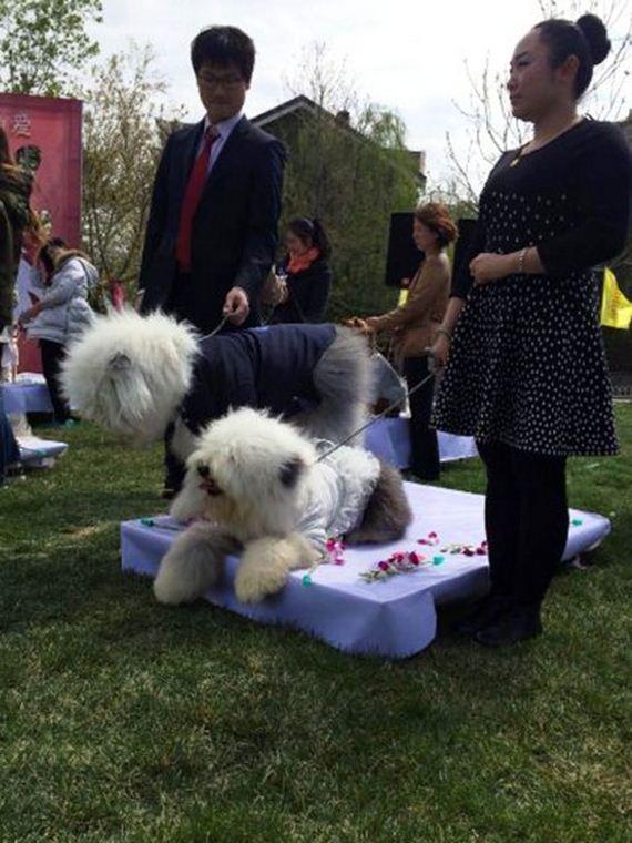 4.16.15-dog-wedding15