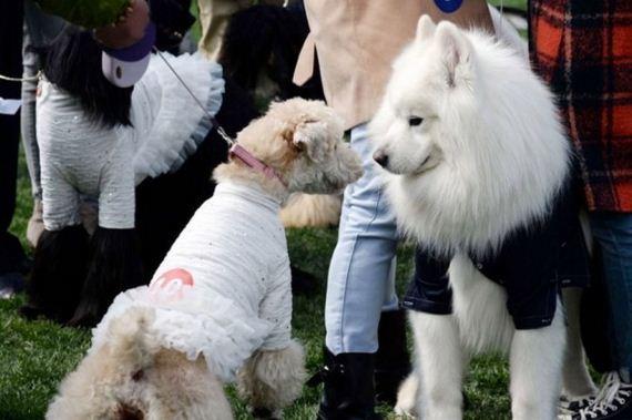 4.16.15-dog-wedding8-590x393