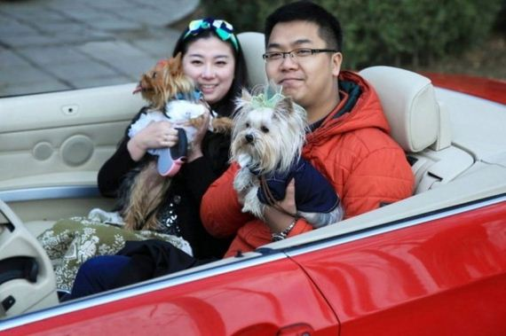 4.16.15-dog-wedding9-590x393