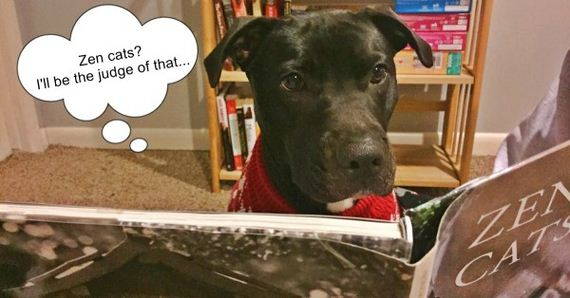 Did You Know That 99.9% Of Dogs Can't Read? Meet One Dog That Can…