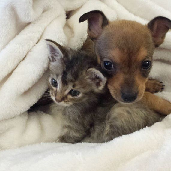 2 Unwanted Shelter Animals Created Their Own Family That'll Melt Your Heart