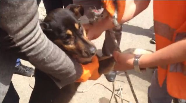 For 2 Weeks, A Tiny Critter Was Stuck In The Sewer…Then, This Rescue Happened