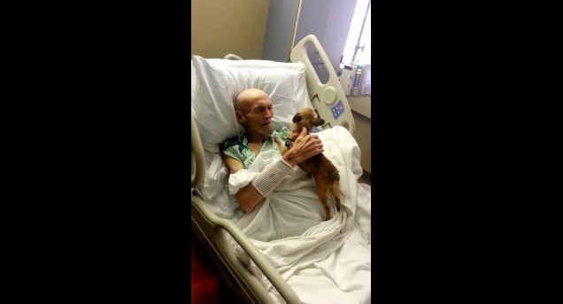 Dying Man Gets A Visit From His Beloved Dog