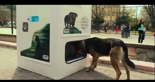 This Brilliant Vending Machine Takes In Bottles & Feeds Stray Dogs In Exchange