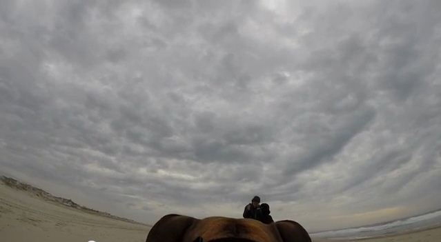 Guy Straps GoPro To His Dog To Secretly Film His Proposal