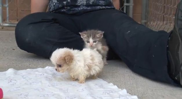 I Thought This Puppy Was The Cutest Thing Ever…'Til I Saw His Fluffy BFF