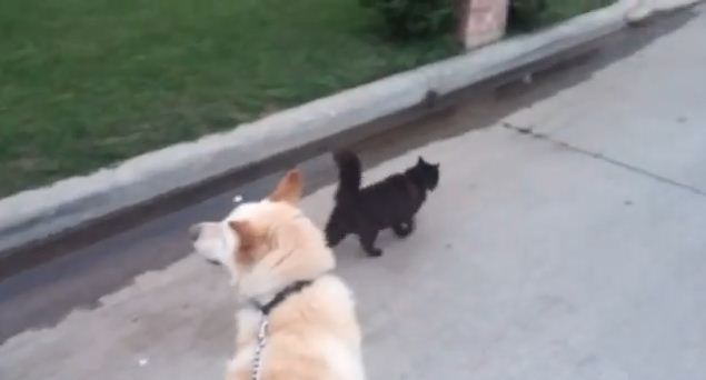 Every Time They Take The Dog For A Walk, Someone Adorably Tries To Tag Along