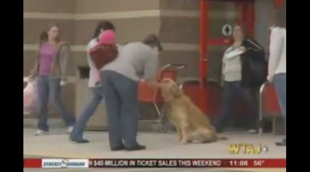 Trains Dog to Be Unofficial Greeter at Local Store