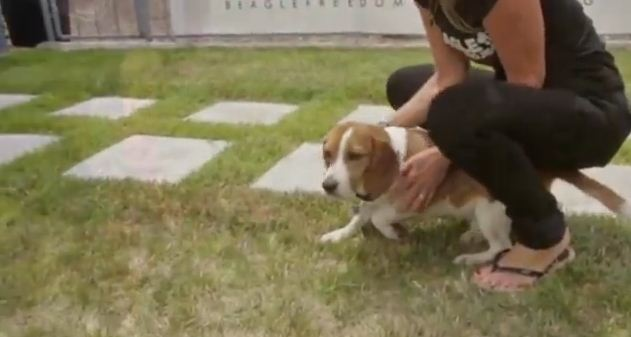 These Dogs Spent Their Entire Lives In A Testing Lab Until This Very Moment When They Were Freed